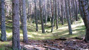 bosque-de-la-mata